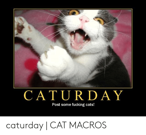 Caturday Cat: CATURDAY  Post some fucking cats! caturday | CAT MACROS