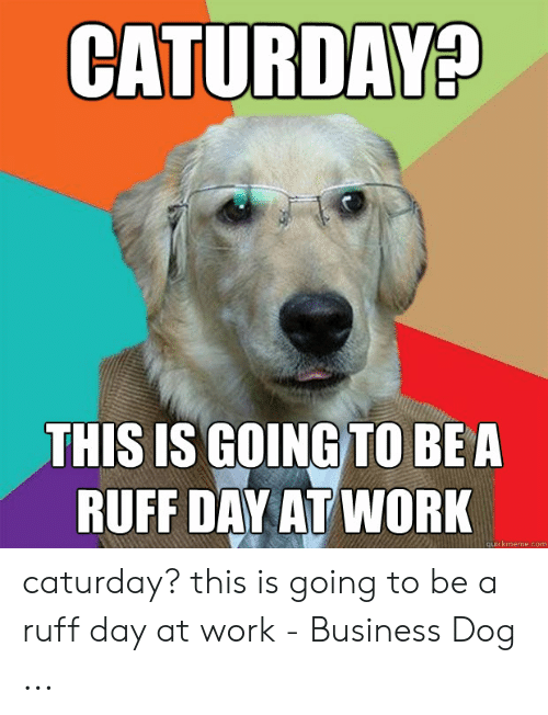 Caturday Meme: CATURDAY?  THIS IS GOING TO BEA  RUFF DAY AT WORK  quickmeme.com caturday? this is going to be a ruff day at work - Business Dog ...