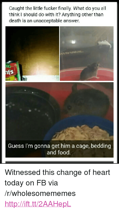 "bedding: Caught the little fucker finally. What do you all  think I should do with it? Anything other than  death is an unacceptable answer.  ts  Guess I'm gonna get him a cage, bedding  and food. <p>Witnessed this change of heart today on FB via /r/wholesomememes <a href=""http://ift.tt/2AAHepL"">http://ift.tt/2AAHepL</a></p>"