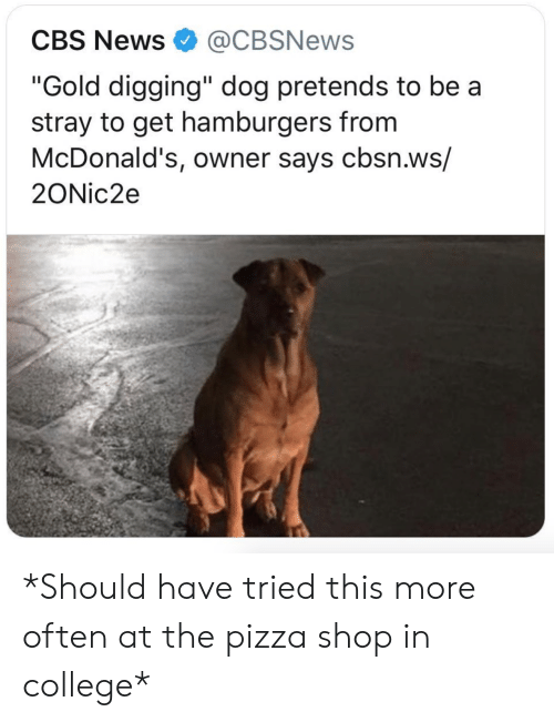 """College, McDonalds, and News: CBS News@CBSNews  """"Gold digging"""" dog pretends to be a  stray to get hamburgers from  McDonald's, owner says cbsn.ws/  2ONic2e *Should have tried this more often at the pizza shop in college*"""