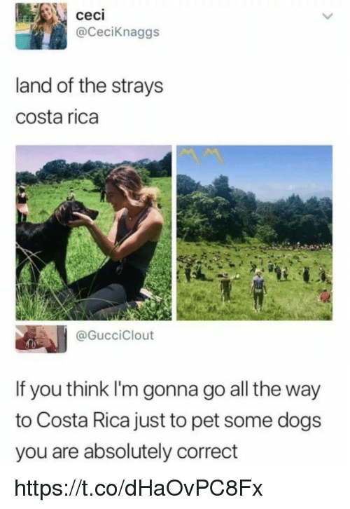 Dogs, Memes, and Costa Rica: ceci  @CeciKnaggs  land of the strays  costa rica  @GucciClout  If you think I'm gonna go all the way  to Costa Rica just to pet some dogs  you are absolutely correct https://t.co/dHaOvPC8Fx