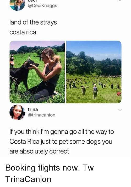 Dogs, Memes, and Booking: @CeciKnaggs  land of the strays  costa rica  trina  @trinacanion  If you think I'm gonna go all the way to  Costa Rica just to pet some dogs you  are absolutely correct Booking flights now. Tw TrinaCanion