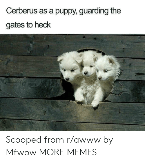 guarding: Cerberus as a puppy, guarding the  gates to heck Scooped from r/awww by Mfwow MORE MEMES