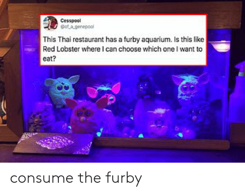 thai: Cesspool  otagenepool  This Thai restaurant has a furby aquarium. Is this like  Red Lobster where I can choose which one I want to  eat? consume the furby