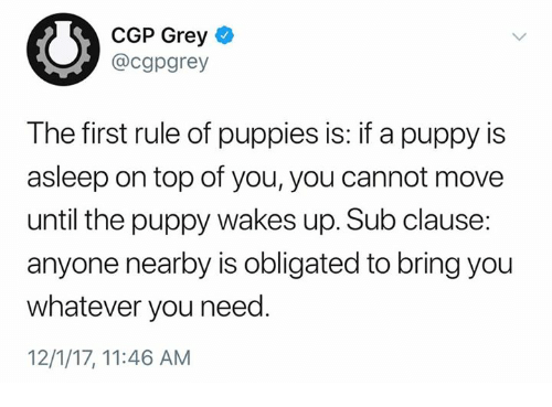 Dank, Puppies, and Grey: CGP Grey  @cgpgrey  The first rule of puppies is: if a puppy is  asleep on top of you, you cannot move  until the puppy wakes up. Sub clause:  anyone nearby is obligated to bring you  whatever you need.  12/1/17, 11:46 AM