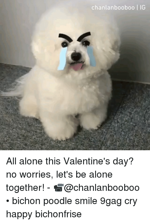 9gag, Being Alone, and Memes: chanlanbooboo | IG All alone this Valentine's day? no worries, let's be alone together! - 📹@chanlanbooboo • bichon poodle smile 9gag cry happy bichonfrise