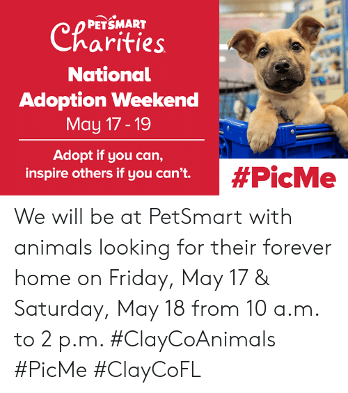 Animals, Friday, and Memes: Charities  PETSMART  National  Adoption Weekend  May 17-19  Adopt if you can,  inspire others if you can't.  We will be at PetSmart with animals looking for their forever home on Friday, May 17 & Saturday, May 18 from 10 a.m. to 2 p.m. #ClayCoAnimals #PicMe #ClayCoFL