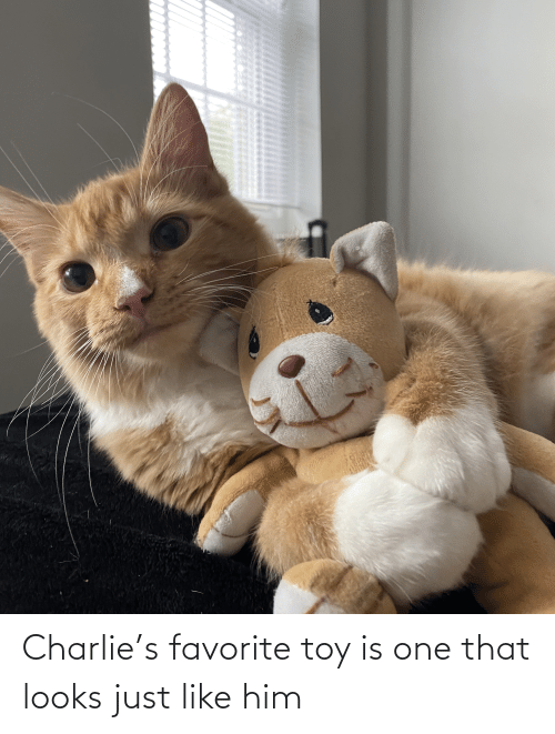 Charlie: Charlie's favorite toy is one that looks just like him