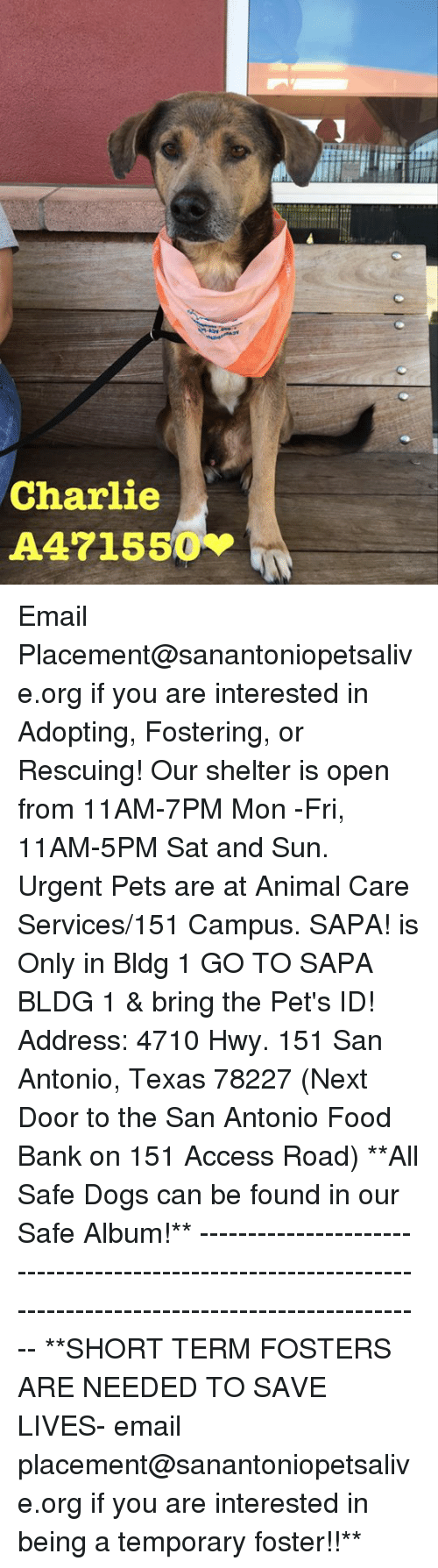 Charlie, Dogs, and Food: Charlie Email Placement@sanantoniopetsalive.org if you are interested in Adopting, Fostering, or Rescuing!  Our shelter is open from 11AM-7PM Mon -Fri, 11AM-5PM Sat and Sun.  Urgent Pets are at Animal Care Services/151 Campus. SAPA! is Only in Bldg 1 GO TO SAPA BLDG 1 & bring the Pet's ID! Address: 4710 Hwy. 151 San Antonio, Texas 78227 (Next Door to the San Antonio Food Bank on 151 Access Road)  **All Safe Dogs can be found in our Safe Album!** ---------------------------------------------------------------------------------------------------------- **SHORT TERM FOSTERS ARE NEEDED TO SAVE LIVES- email placement@sanantoniopetsalive.org if you are interested in being a temporary foster!!**