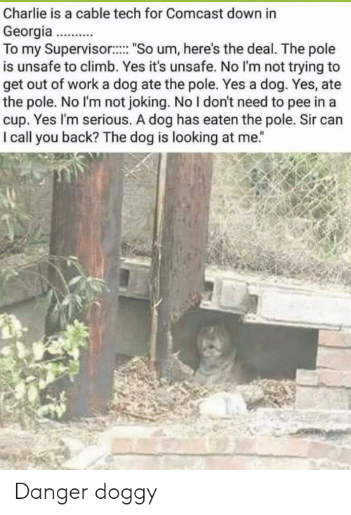 "Dog Has: Charlie is a cable tech for Comcast down in  Georgia..  To my Supervisor: ""So um, here's the deal. The pole  is unsafe to climb. Yes it's unsafe. No l'm not trying to  get out of work a dog ate the pole. Yes a dog. Yes, ate  the pole. No I'm not joking. No I don't need to pee in a  cup. Yes I'm serious. A dog has eaten the pole. Sir can  I call you back? The dog is looking at me."" Danger doggy"