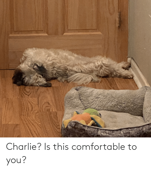 Charlie: Charlie? Is this comfortable to you?