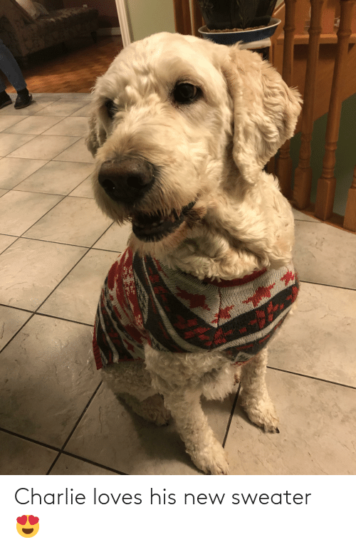 Charlie, New, and Sweater: Charlie loves his new sweater 😍