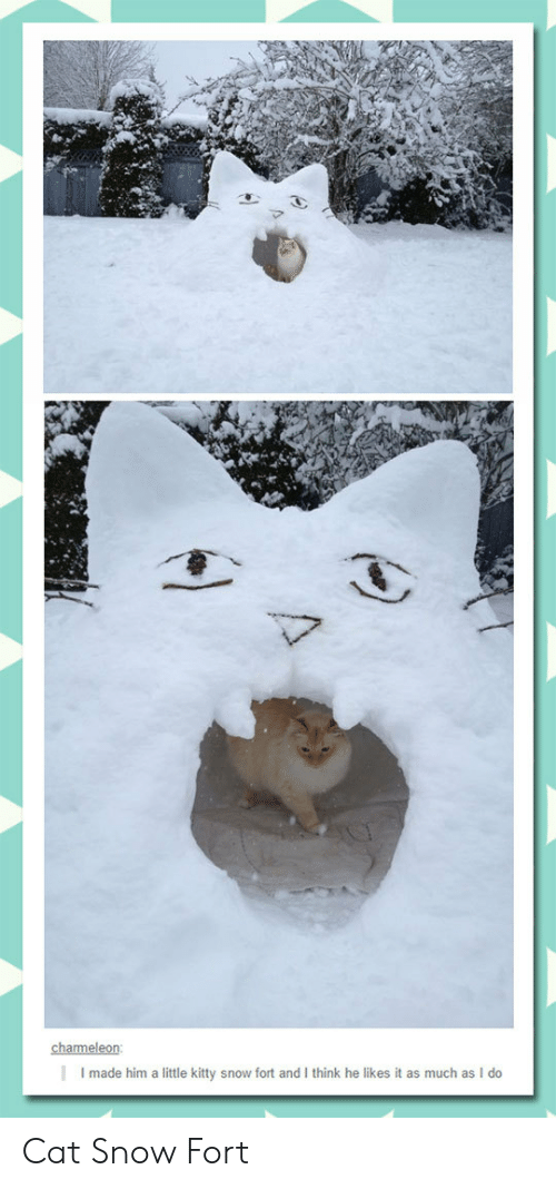 He Likes It: charmeleon  Imade him a little kitty snow fort and I think he likes it as much as I do Cat Snow Fort