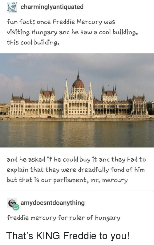 Freddie Mercury: charminglyantiquated  fun fact, once Freddie Mercury was  visiting Hungary and he saw a cool building.  this cool buildin  go  and he asked if he could buy it and they had to  explaîn that they were dreadfully fond of him  but that is our parliamentą mro mercury  amydoesntdoanything  freddie mercury for ruler of hungary That's KING Freddie to you!