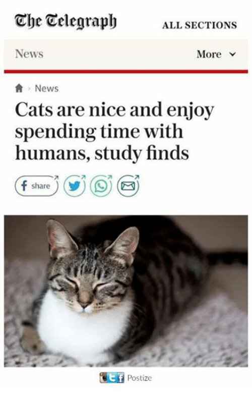 Nicee: Che Telegraph  ALL SECTIONS  News  News  Cats are nice and enjoy  spending time with  humans, study finds  share  Postize