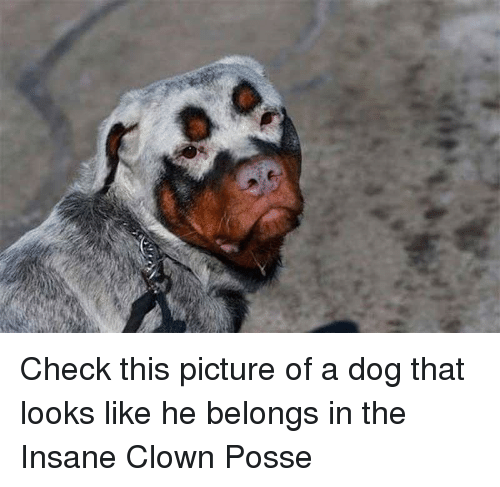 Insane Clown Posse, Dog, and Clown: Check this picture of a dog that looks like he belongs in the Insane Clown Posse