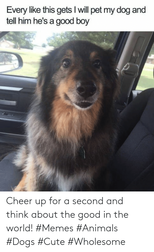 The Good: Cheer up for a second and think about the good in the world! #Memes #Animals #Dogs #Cute #Wholesome