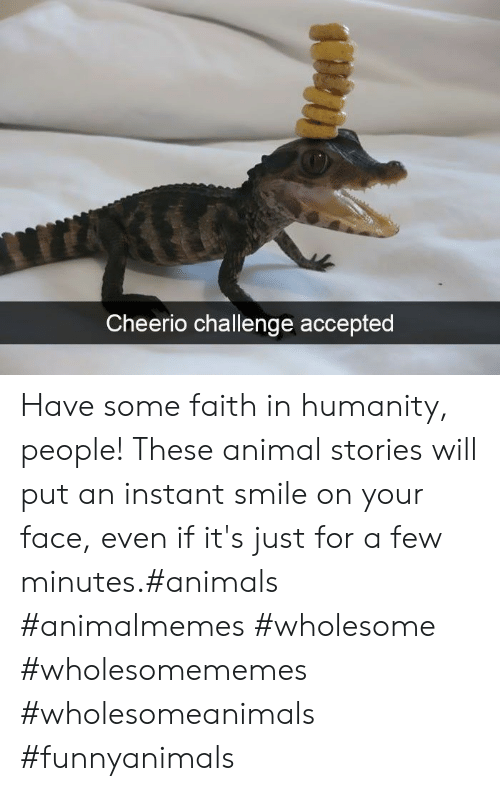 challenge: Cheerio challenge accepted Have some faith in humanity, people! These animal stories will put an instant smile on your face, even if it's just for a few minutes.#animals #animalmemes #wholesome #wholesomememes #wholesomeanimals #funnyanimals
