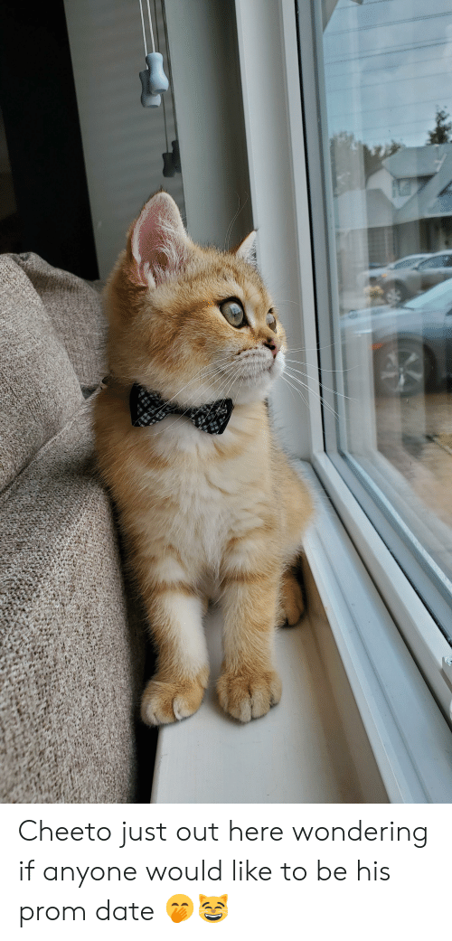 Date, Like, and Just: Cheeto just out here wondering if anyone would like to be his prom date 🤭😸