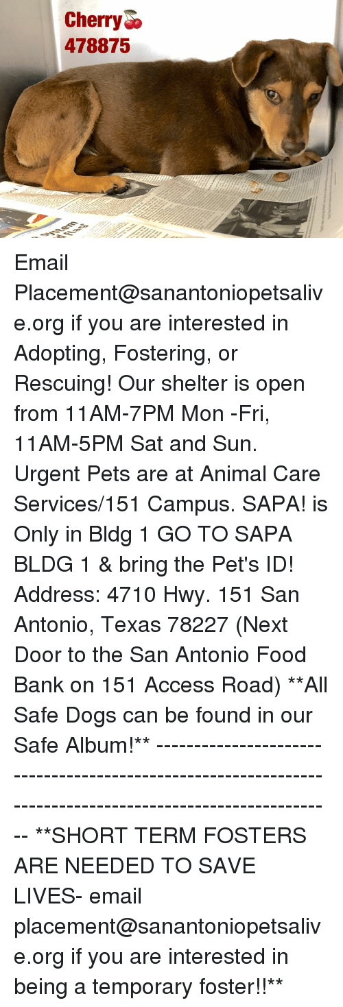 Dogs, Food, and Memes: CherryD  478875 Email Placement@sanantoniopetsalive.org if you are interested in Adopting, Fostering, or Rescuing!  Our shelter is open from 11AM-7PM Mon -Fri, 11AM-5PM Sat and Sun.  Urgent Pets are at Animal Care Services/151 Campus. SAPA! is Only in Bldg 1 GO TO SAPA BLDG 1 & bring the Pet's ID! Address: 4710 Hwy. 151 San Antonio, Texas 78227 (Next Door to the San Antonio Food Bank on 151 Access Road)  **All Safe Dogs can be found in our Safe Album!** ---------------------------------------------------------------------------------------------------------- **SHORT TERM FOSTERS ARE NEEDED TO SAVE LIVES- email placement@sanantoniopetsalive.org if you are interested in being a temporary foster!!**