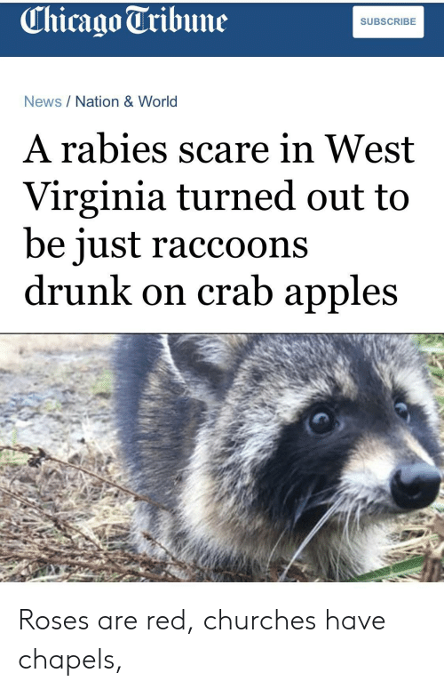 rabies: Chicago Tribune  SUBSCRIBE  News/Nation & World  A rabies scare in West  Virginia turned out to  be iust raccoons  drunk on crab apples Roses are red, churches have chapels,