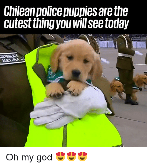 Dank, God, and Oh My God: Chilean police puppies are the  cutest thingyou willsee today Oh my god 😍😍😍