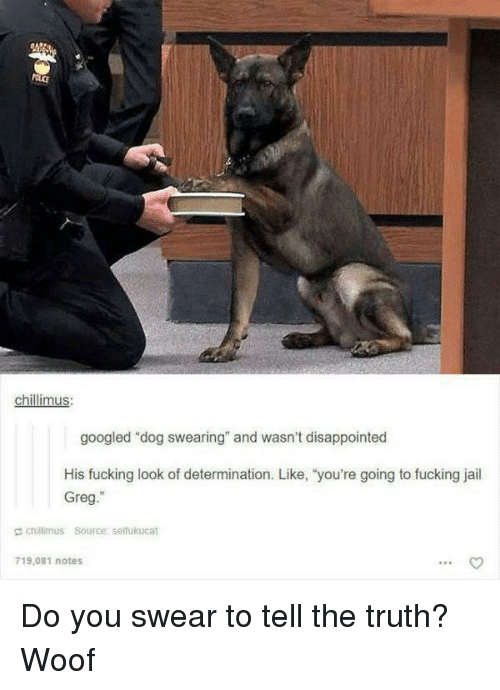 """Disappointed, Fucking, and Jail: chillimus  googled """"dog swearing"""" and wasn't disappointed  His fucking look of determination. Like, """"you're going to fucking jail  Greg.""""  E chillimus Source serfukucat  719,081 notes Do you swear to tell the truth? Woof"""