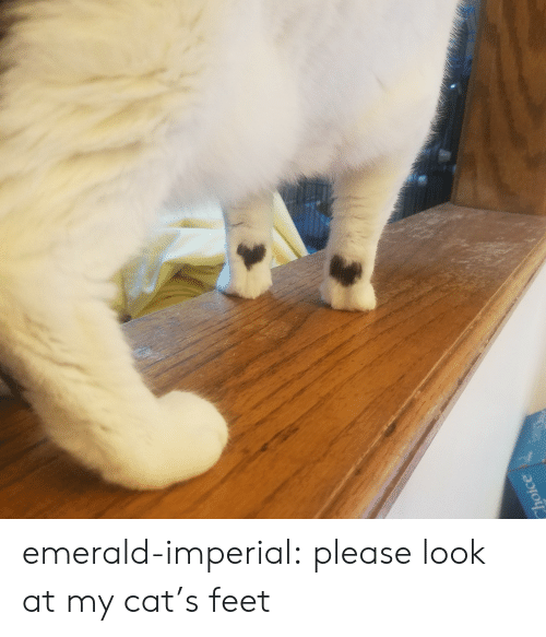 Cats, Target, and Tumblr: Choice emerald-imperial:  please look at my cat's feet