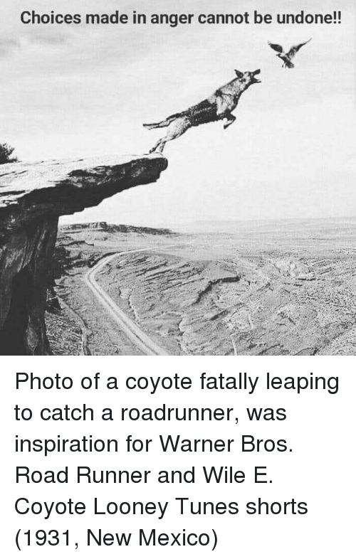 Looney Tunes, Warner Bros., and Coyote: Choices made in anger cannot be undone!! Photo of a coyote fatally leaping to catch a roadrunner, was inspiration for Warner Bros. Road Runner and Wile E. Coyote Looney Tunes shorts (1931, New Mexico)