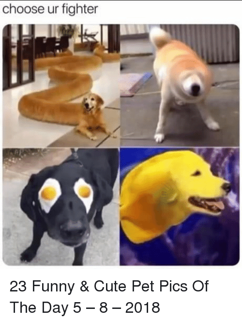 Cute, Funny, and Pet: choose ur fighter 23 Funny & Cute Pet Pics Of The Day 5 – 8 – 2018
