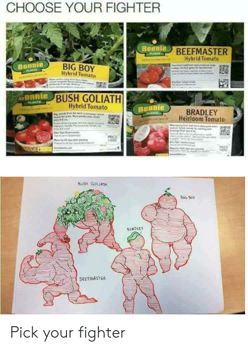 goliath: CHOOSE YOUR FIGHTER  BEEFMASTER  Hybrid Tomato  BIG BOY  Hybrid Tomato  Bonnie  BUSH GOLIATH  Hybrid Tomato  BRADLEY  Heirloom Tomato  BUsH GoLIATH  BIG Boy  SEADLEY  BEEFMASTER Pick your fighter