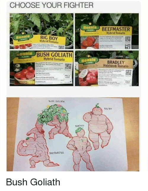 goliath: CHOOSE YOUR FIGHTER  Bonnie  BEEFMASTER  Hybrid Tomato  BIG BOY  Hybrid Tomato  BUSH GOLIATH  Hybrid Tomato  BRADLEY  Heirloom Tomato  UsH GoLIATH  BIG BON  SCADLEY  BEEFMASTER Bush Goliath