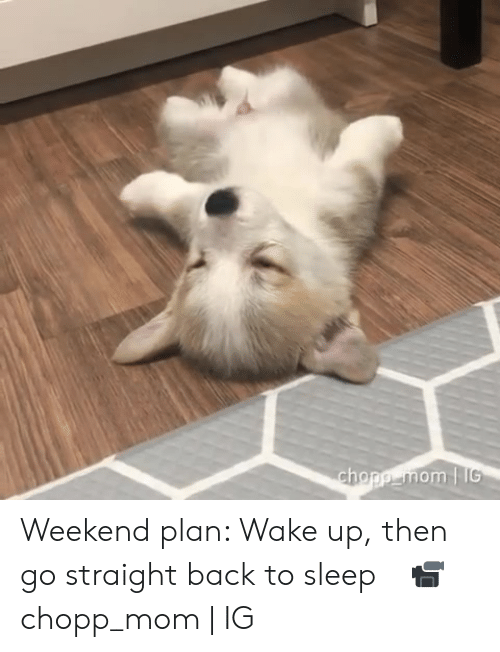 Dank, Sleep, and Mom: chopp mom IG Weekend plan: Wake up, then go straight back to sleep⠀  📹 chopp_mom | IG