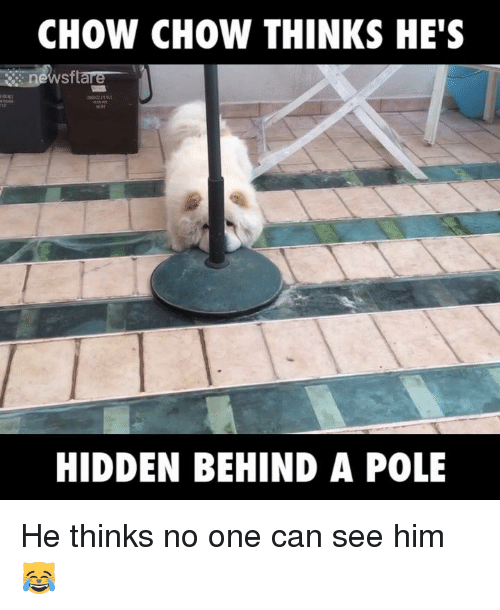 Dank, 🤖, and Hidden: CHOW CHOW THINKS HE'S  sftare  HIDDEN BEHIND A POLE He thinks no one can see him 😹