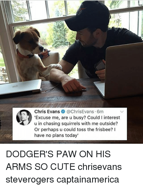 Chris Evans, Cute, and Dodgers: Chris Evans@ChrisEvans 6m  'Excuse me, are u busy? Could I interest  u in chasing squirrels with me outside?  Or perhaps u could toss the frisbee? lI  have no plans today' DODGER'S PAW ON HIS ARMS SO CUTE chrisevans steverogers captainamerica