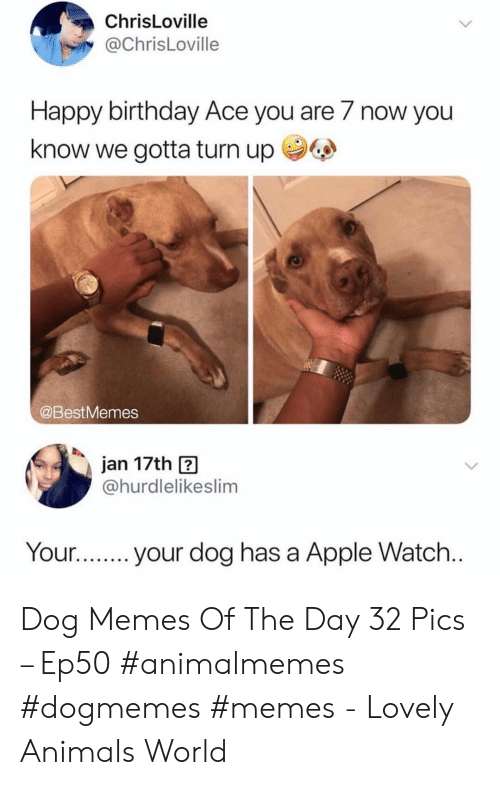 Dog Has: ChrisLoville  @ChrisLoville  Happy birthday Ace you are 7 now you  know we gotta turn up  @BestMemes  jan 17th  @hurdlelikeslim  Your...  your dog has a Apple Watch... Dog Memes Of The Day 32 Pics – Ep50 #animalmemes #dogmemes #memes - Lovely Animals World