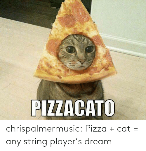 string: chrispalmermusic:  Pizza + cat = any string player's dream