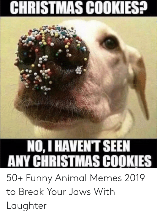 CHRISTMAS COOKIES? NO I HAVENT SEEN ANY CHRISTMAS COOKIES 50