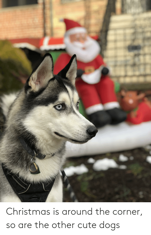 cute dogs: Christmas is around the corner, so are the other cute dogs