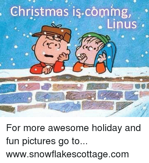 linus: Christmas is coming,  Linus For more awesome holiday and fun pictures go to... www.snowflakescottage.com