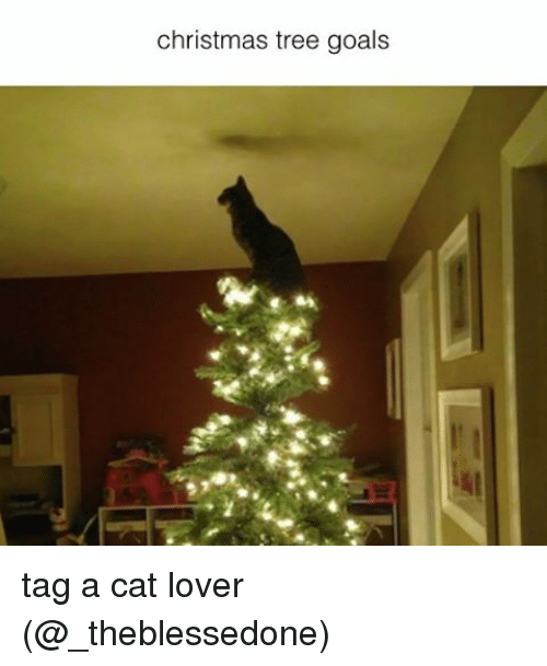 cat lover: christmas tree goals tag a cat lover (@_theblessedone)
