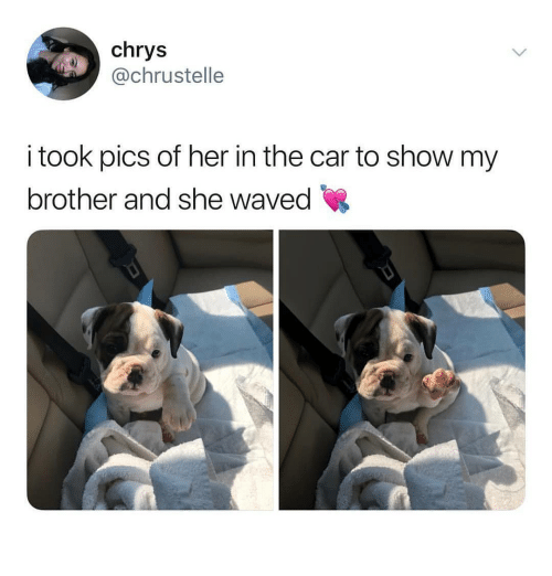 Memes, 🤖, and Her: chry:s  @chrustelle  took pics of her in the car to show my  brother and she waved