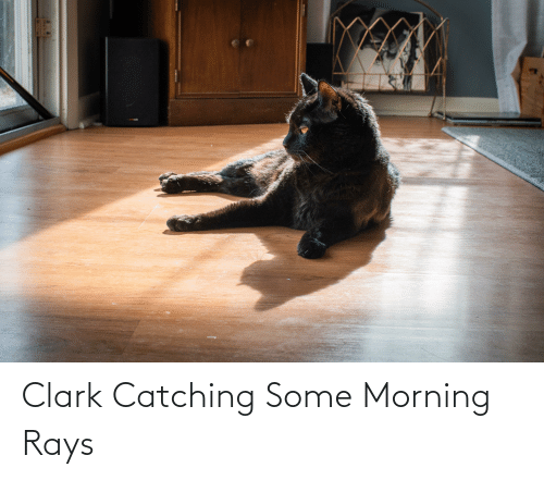 Clark: Clark Catching Some Morning Rays