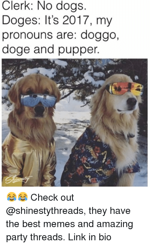 doges: Clerk: No dogs  Doges: It's 2017, my  pronouns are: doggo,  doge and pupper 😂😂 Check out @shinestythreads, they have the best memes and amazing party threads. Link in bio