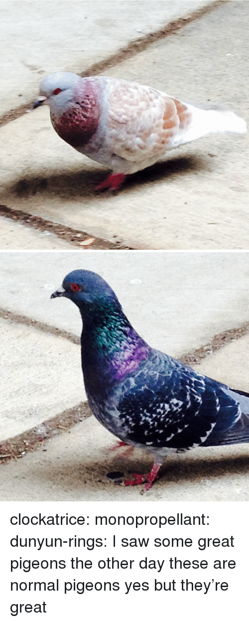 pigeons: clockatrice: monopropellant:  dunyun-rings:  I saw some great pigeons the other day  these are normal pigeons  yes but they're great