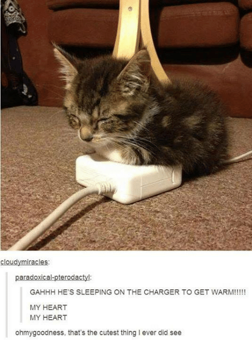 Memes, Heart, and Sleeping: cloudymiracles:  GAHHH HE'S SLEEPING ON THE CHARGER TO GET WARM!!!!!  MY HEART  MY HEART  ohmygoodness, that's the cutest thing I ever did see