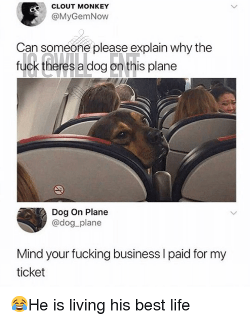 Fucking, Life, and Memes: CLOUT MONKEY  @MyGemNow  Can someone please explain why the  fuck theres a dog on this plane  Dog On Plane  @dog plane  Mind your fucking business I paid for my  ticket 😂He is living his best life