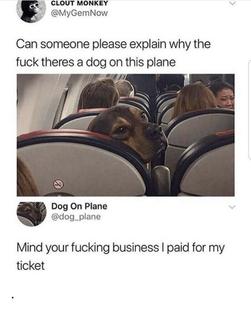 plane: CLOUT MONKEY  @MyGemNow  Can someone please explain why the  fuck theres a dog on this plane  Dog On Plane  @dog_plane  Mind your fucking business I paid for my  ticket .