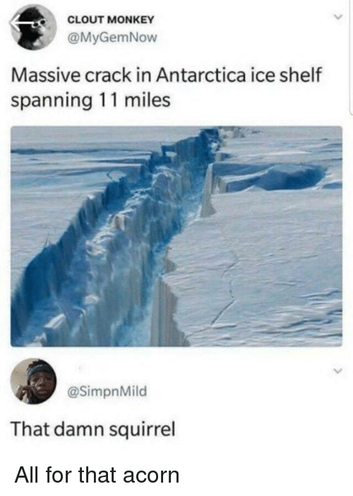 Memes, Monkey, and Squirrel: CLOUT MONKEY  @MyGemNow  Massive crack in Antarctica ice shelf  spanning 11 miles  @SimpnMild  That damn squirrel All for that  acorn