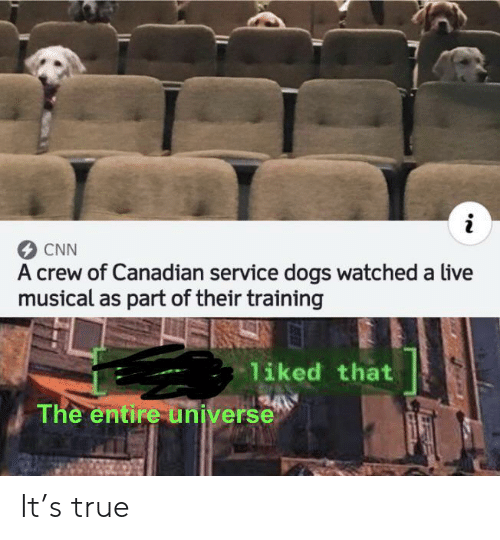 Canadian: CNN  A crew of Canadian service dogs watched a live  musical as part of their training  liked that  The entire universe It's true